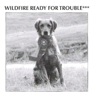 Article - Wildfire Goldens